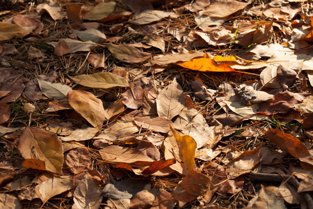 sear and yellow leaf: Autumn leaves background. Ready design element. Color correction, toning