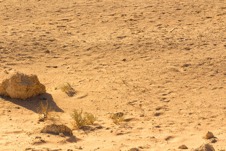 arenas movedizas: Desierto patr�n de arena de textura de fondo de la arena en Sharm el-Sheikh, Egipto