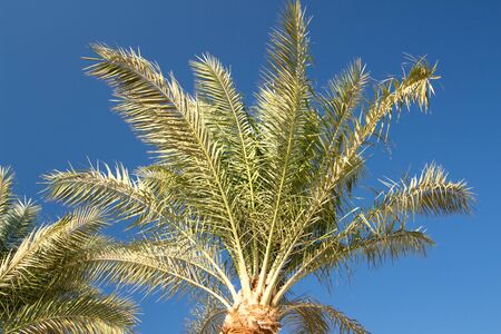 Palms are a popular symbol for the tropics and for vacations