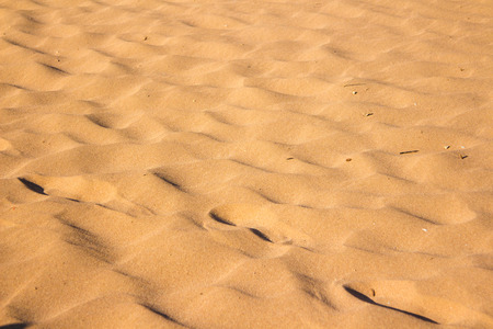 wilds: Desert sand texture from the sand in Egypt