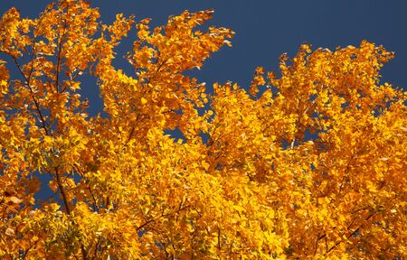 frondage: Bright autumn leaves on a clear day