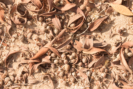 frondage: Dried leaves, twigs and seeds in the ground