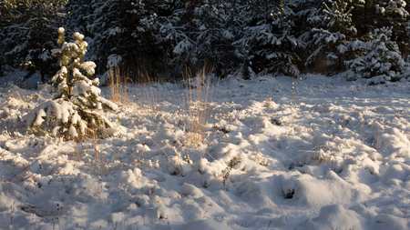 frozenned: Winter scene. Winter landscape with snow in morning light