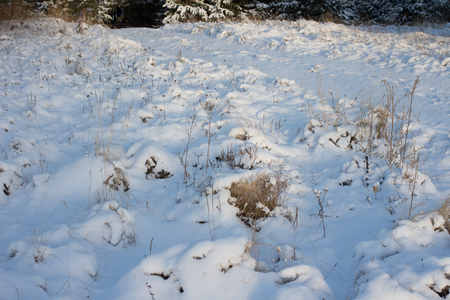 downtime: Winter scene. Winter landscape with snow in morning light