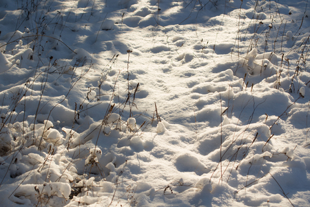 layoff: Winter scene. Winter landscape with snow in morning light