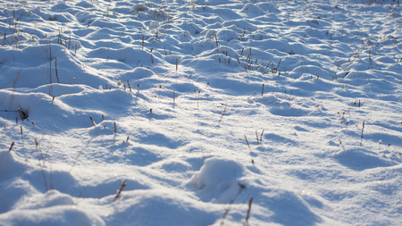 glory of the snow: Winter scene. Winter landscape with snow in morning light