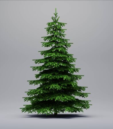 spruce tree: Spruce tree on a grey background with shadow