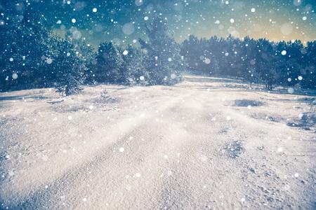 abeto: Escena de la nieve del invierno con el fondo del bosque