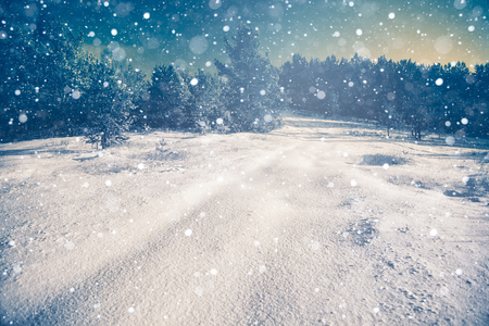 neige qui tombe: Scène d'hiver de neige avec fond de forêt
