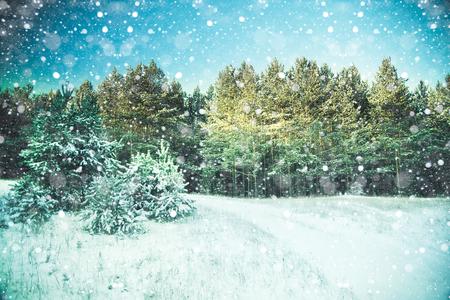 abetos: Escena de la nieve del invierno con el fondo del bosque