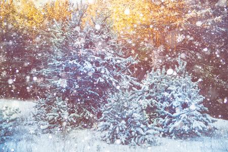 motivos navide�os: Escena de la nieve del invierno con el fondo del bosque
