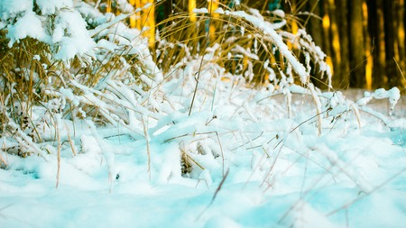 Abstract Winter background, Winter Outdoor Scene, Happy New Year and Merry Christmas Background for a Greeting or Message about Promotions and Sales, for Social Media, Posters, Email, Print, Ads