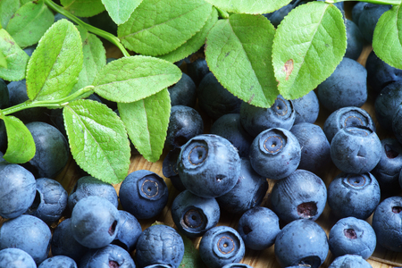 wildberry: Freshly Picked Blueberry, Blueberries, Fresh Berry, Berries, Bilberry, Bilberries with Green Leaves on Rustic Table, Wildberry on Wooden Background, Blaeberry Antioxidant, Healthy Eating, Nutrition Stock Photo