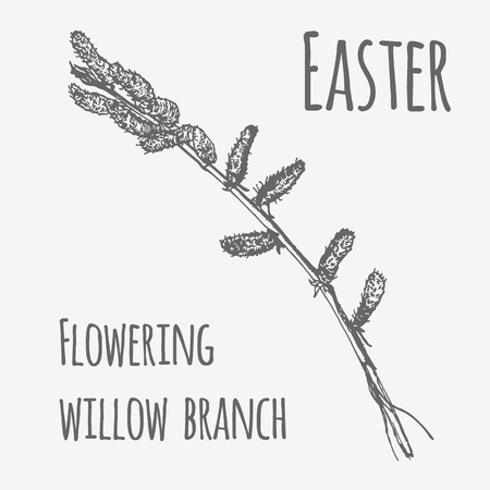 Vector illustration of spring flowering willow branch. Lineart monochrome image Illustration