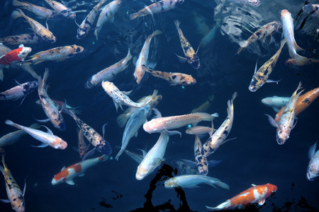 blue fish: Many kind of fish in water