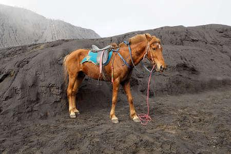 beautyful: Beautyful Horse on Broma mountain