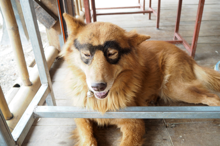 Tha dog painted glasses on his eyes