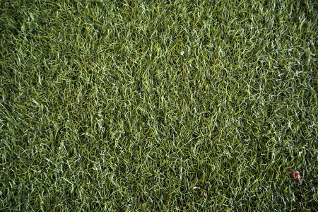 green grass backgroud look so nice and beautyful