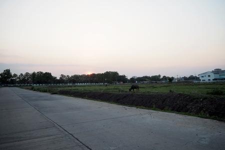 sunset on rice field look nice and beautyful
