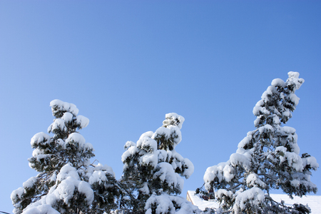 trees in snow, winter, icing, element, disaster, severe weather, cataclysms, fairy-tale nature