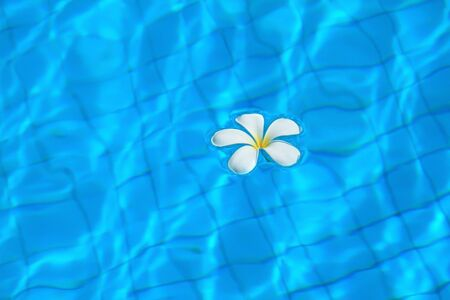 White flowers in the pool.
