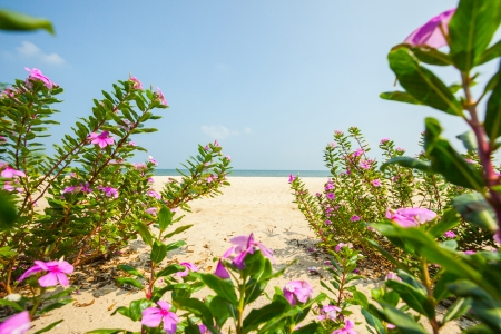 Flowers blooming on beach. photo