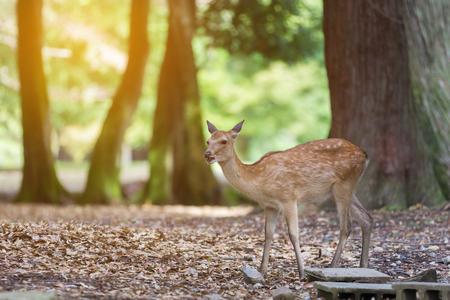 Deer in the jungle in Nara city, Japan