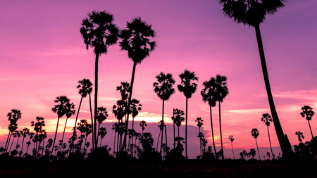beautiful sunset , silhouettes Palm tree , landscape thailand