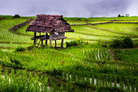 hut of rice fields on terraced  , rice plantations , Chiangmai province , North of thailand