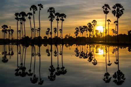 beautiful sunset reflection of silhouettes Palm tree , landscape thailand Stock Photo