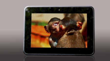 altogether: monkey, Stock Photo