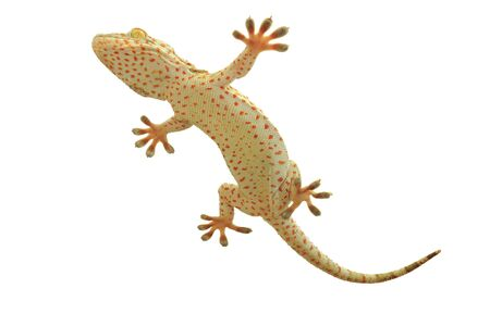 reptilian: gecko, Stock Photo