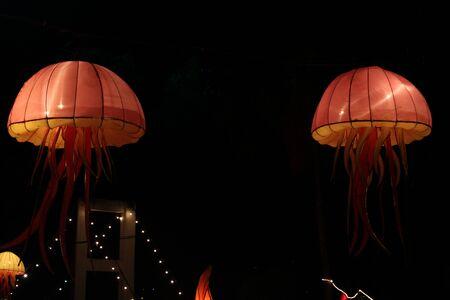 colorful coral reef  Amazing Lantern @ Hat Yai Songkha Thailand