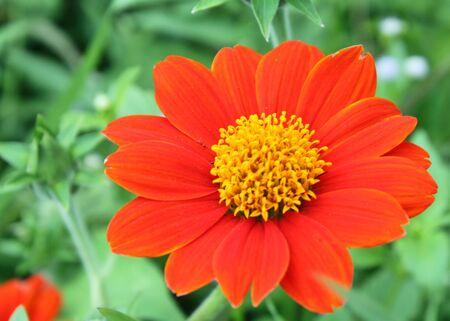 red flower in the garden Stock Photo - 12927914