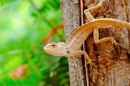 prin: Los lagartos son presa emboscada.