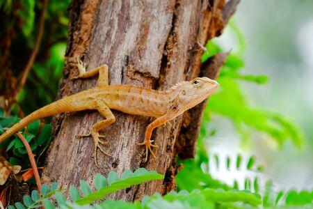 prin: Los lagartos est�n buscando para capturar a sus presas.
