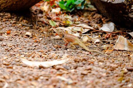 prin: Si bien se ven los lagartos no ser víctima.