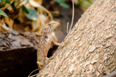 prin: Los lagartos están buscando víctimas que quieren capturar.