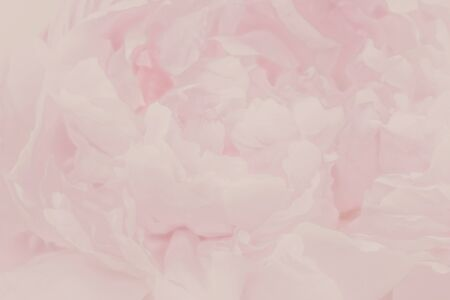 Abstract flower background. flowers made with soft color filters. Stock Photo