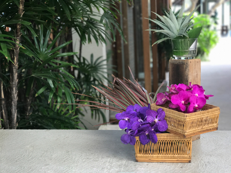 epiphytic: purple and pink orchids in wicker basket. Stock Photo