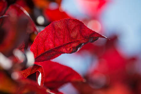 seasonality: Red leaves on bright background Stock Photo