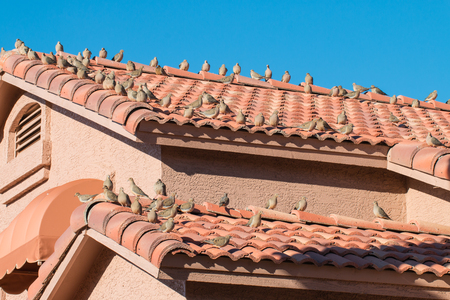 gutter: Many brids on the house roof. Stock Photo
