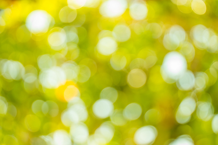Abstract nature green and yellow background. Defocused. Reklamní fotografie