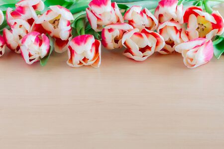 Close up of red tulips on wooden background. Stock Photo