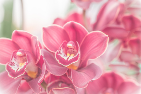 Close up of pink  orchid in soft color and blur style for background,  selective focus. Stock Photo