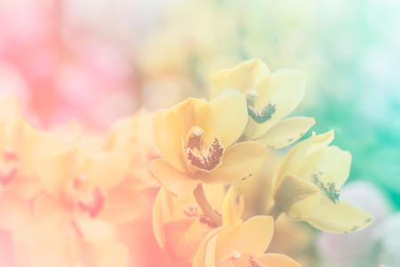 Close up of Sweet color orchid in soft color and blur style for background
