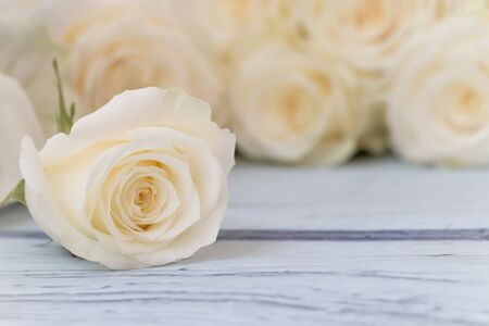 Close up of a beautiful white rose on wood table.