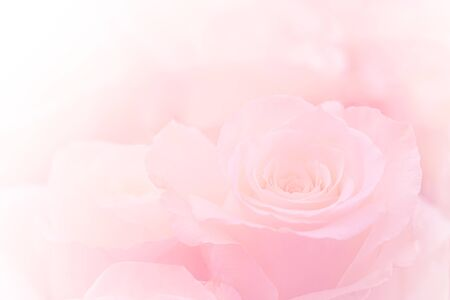 Pink Roses Flowers Bouquet on light pink background. soft filter. Stok Fotoğraf - 132110705