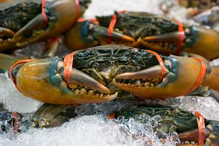 Black crab at the market in Thailand