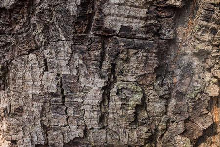 tn: The tree texture tn Thailand Stock Photo